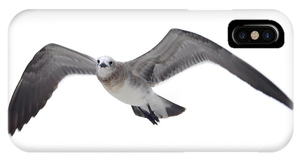Sea Gull IPhone Case