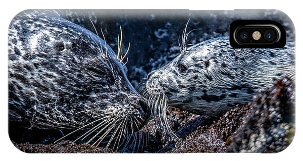 Seal Pup With Mom IPhone Case