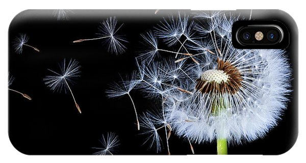 Pistil iPhone Case - Silhouettes Of Dandelions by Bess Hamiti