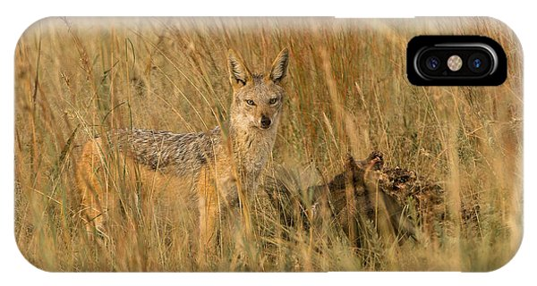 Silver Backed Jackal IPhone Case