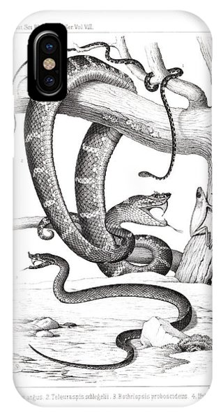 IPhone Case featuring the drawing Snakes And Frogs Of Costa Rica by T Sinclair