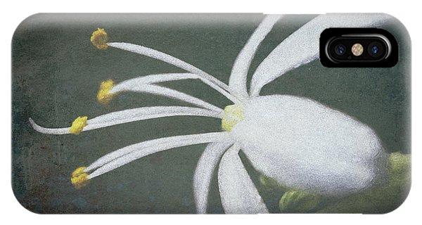 Spider Plant Flower II IPhone Case
