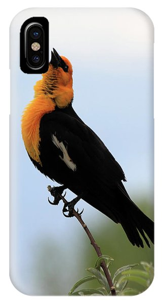 IPhone Case featuring the photograph Standing Tall by Shane Bechler