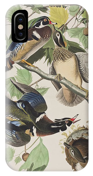 Wood Ducks iPhone Case - Summer Or Wood Duck by John James Audubon