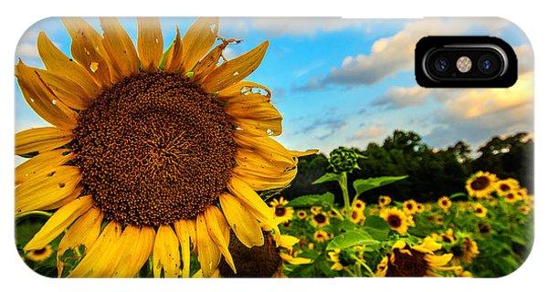 Summer Suns  IPhone Case