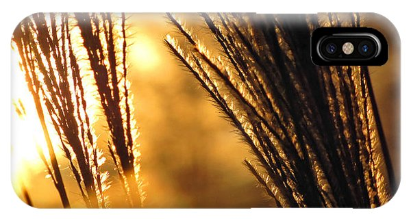 Amber iPhone Case - Sun Grass Wind by Amy Tyler