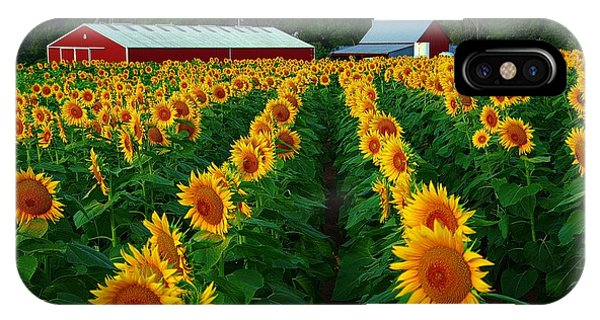 Sunflower Field #4 IPhone Case