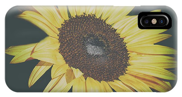 Sunflower Seeds iPhone Case - Sunflower by Martin Newman