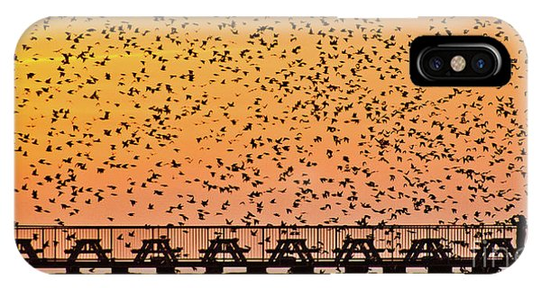 Sunset And Starlings In Aberystwyth Wales IPhone Case