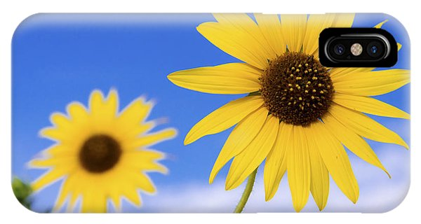 Sunflower iPhone Case - Sunshine by Chad Dutson