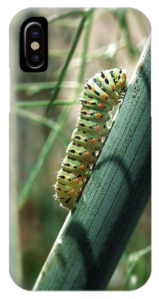 Swallowtail Caterpillar IPhone Case