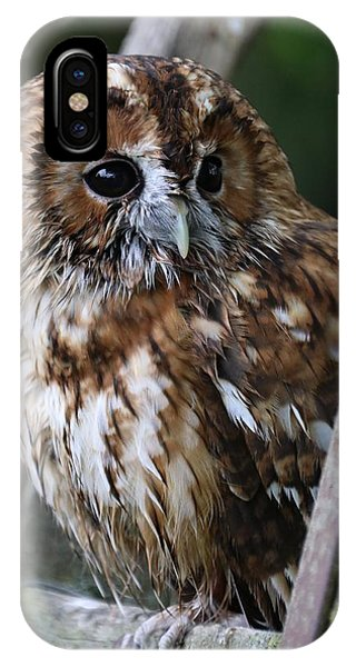 Tawny Owl IPhone Case