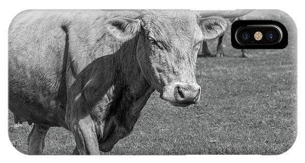 IPhone Case featuring the photograph Texas Longhorns by Robert Bellomy