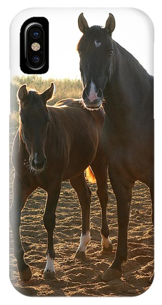 Texas Mare  IPhone Case