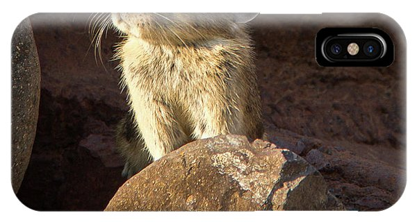 The Coast Is Clear Wildlife Photography By Kaylyn Franks IPhone Case
