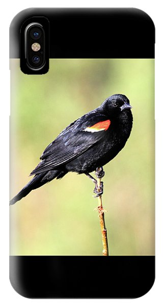 IPhone Case featuring the photograph The Look by Shane Bechler