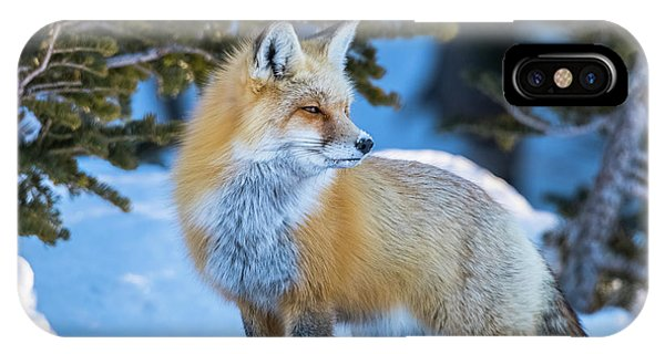 The Snow Beauty IPhone Case