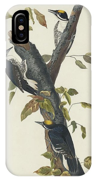 Three-toed Woodpecker IPhone Case