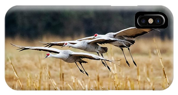 Sandhill Crane iPhone Case - Tight Formation by Mike Dawson