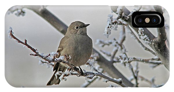 Townsend's Solitaire IPhone Case
