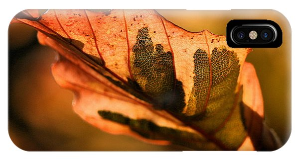 Tri-color Beech In Autumn IPhone Case