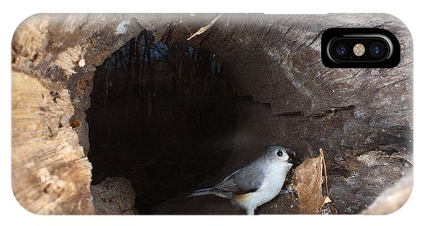 Tufted Titmouse In A Log IPhone Case