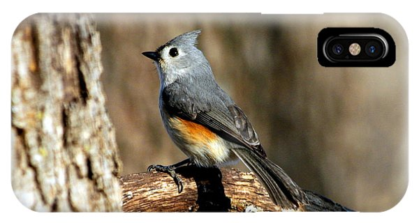 Tufted Titmouse On Branch IPhone Case