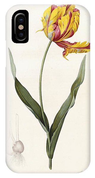 Elegant iPhone Case - Tulip by Pierre Joseph Redoute