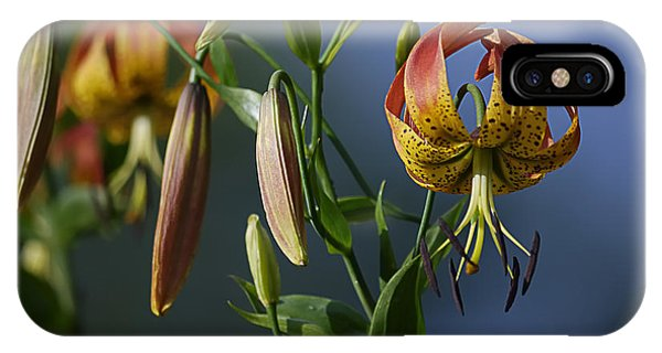 Turk's Cap Lily IPhone Case
