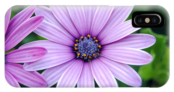 The African Daisy 3 IPhone Case