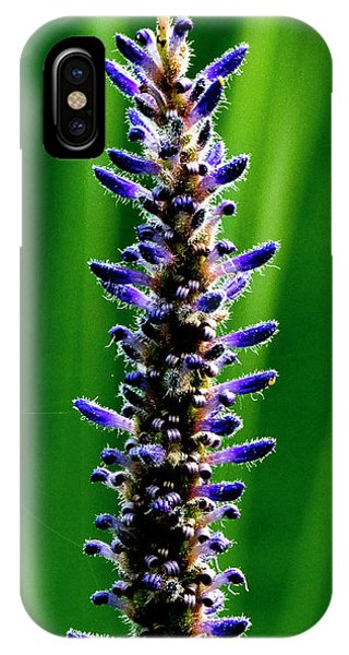 IPhone Case featuring the photograph Water Plant 3 by Buddy Scott