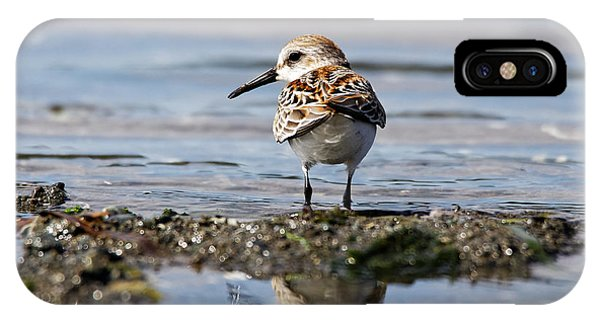 IPhone Case featuring the photograph Western Sandpiper by Sue Harper