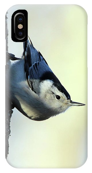White Breasted Nuthatch Wading River New York IPhone Case