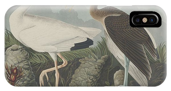 Ibis iPhone Case - White Ibis by Dreyer Wildlife Print Collections