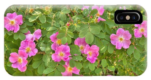 Wild Roses IPhone Case