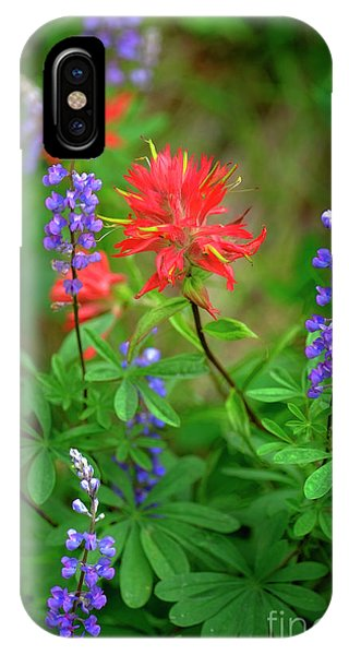 Scarlet Paintbrush iPhone Case - Wildflowers In Mountains Wilderness by Lane Erickson