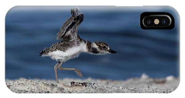Wilson's Plover IPhone Case