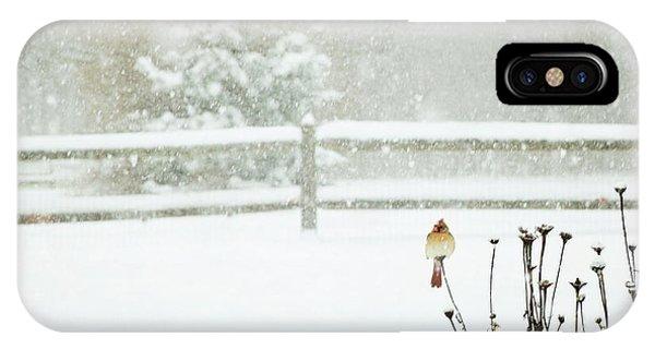 Winter Cardinal IPhone Case