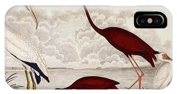 Ibis iPhone Case - Wood Ibis, Scarlet Flamingo, White Ibis by Alexander Wilson