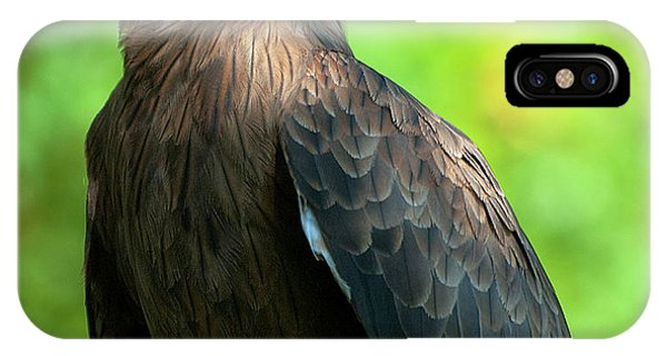 Yellow-billed Kite IPhone Case