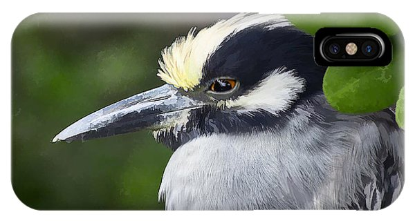 Yellow-crowned Night Heron IPhone Case