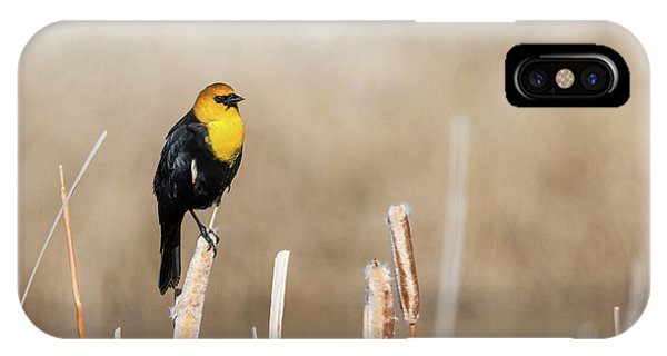 Yellow Headed Blackbird IPhone Case