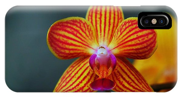Little Things iPhone Case - Yellow Orchid by Jeff Swan
