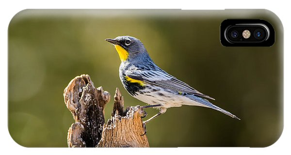 IPhone Case featuring the photograph Yellow-rumped Warbler by Tam Ryan
