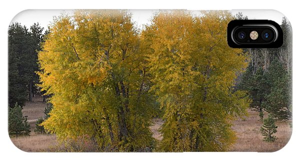 Aspen Trees In The Fall Co IPhone Case