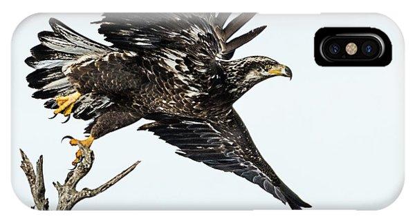 Bald Eagle IPhone Case