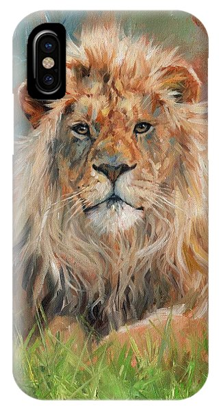 African Lion Art iPhone Case - Lion by David Stribbling