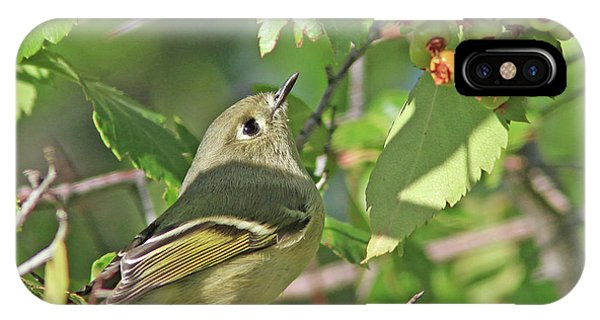 Ruby-crowned Kinglet IPhone Case