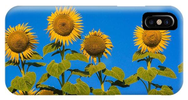 Sunflower iPhone Case - Field Of Sunflowers by Bernard Jaubert