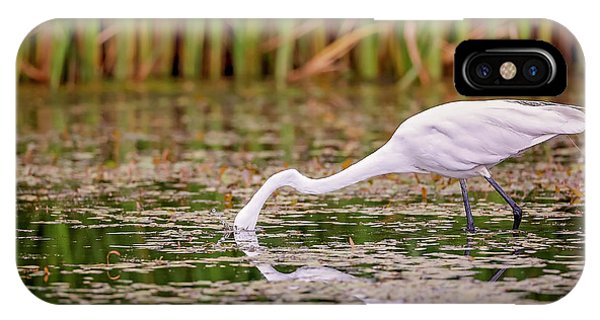 White, Great Egret IPhone Case